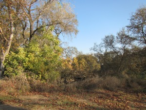 A wild remnant near the Feather River in the Sutter Bypass
