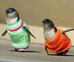 Warning: Penguins are not in need of any sweaters!